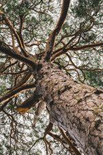 Štiepajte drevo